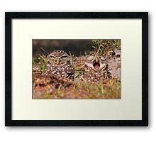 We Hate Mornings - Burrowing Owls Framed Print