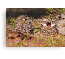 We Hate Mornings - Burrowing Owls Canvas Print