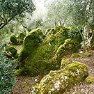 Fairytale forest greece griechenland Korfu Corfu by Andreas Jontsch