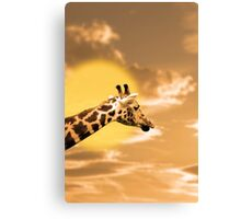 zebra portrait in the sunset Canvas Print
