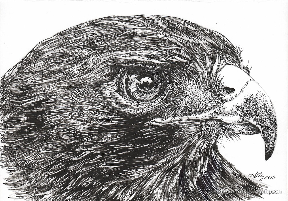 Red Tail Hawk by Kathleen Kelly-Thompson