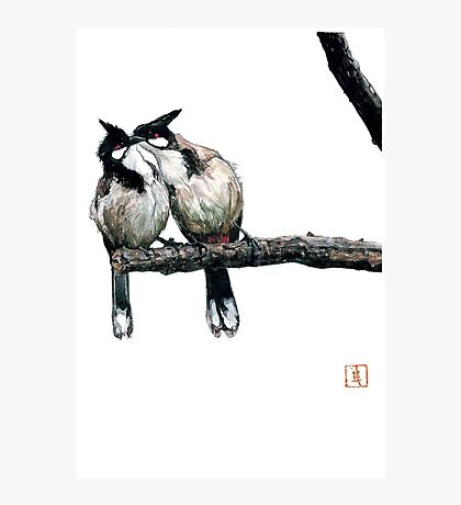 Two birds on a branch Photographic Print