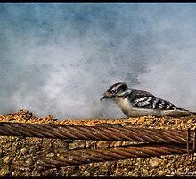 Woodpecker by greyrose