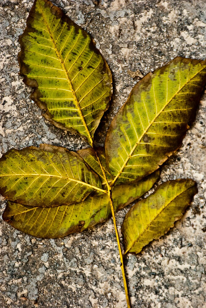 a leaf II by Clockworkmary