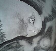 bald eagle by Gez Sullivan
