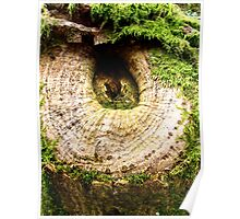Tree Knot Poster