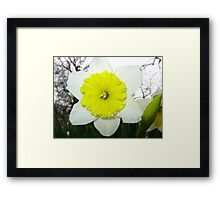 Happy Buttercup Framed Print