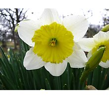 Signs Of Spring 2012 6 Photographic Print