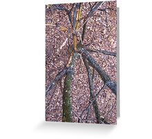 Have You Ever Looked Down A Tree Trunk Greeting Card