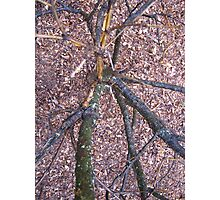 Have You Ever Looked Down A Tree Trunk Photographic Print