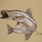 Snook in Acrylic by mhm710