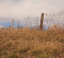 fence in mid morning by mswobo