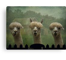 The Alpaca Farm Canvas Print
