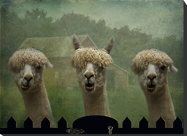 The Alpaca Farm by swaby