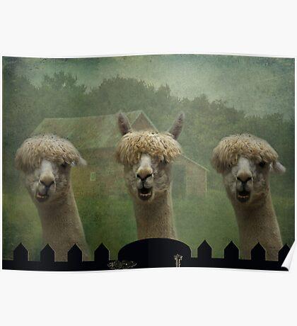 The Alpaca Farm Poster