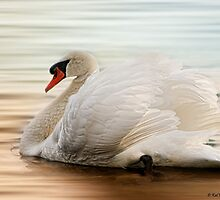 The Plight of the Mute Swan by KatMagic Photography