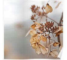 Winter's Garden Moments Poster
