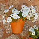Wall with flowers by Vac1