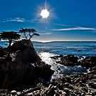 Lone Cypress Monterey by Scott  Remmers