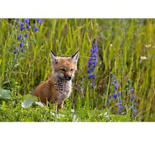 Red Fox Kit Photographic Print