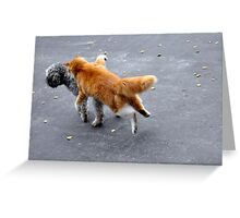 Unsuspecting  Greeting Card