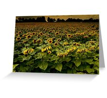 Sunflower Nation Greeting Card