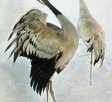 The Dance of the Cranes - 2 of 2 by steppeland
