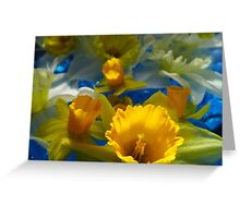 Daffodils In Blue Greeting Card