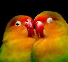 Lovebirds by Tamara  Kenneally