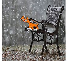 Cat Catches Snow Flakes O His Tong Photographic Print