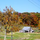 THE BARN IN AUTUMN by Pauline Evans