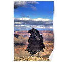 Canyon  Raven Poster
