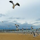 Seagulls day out by Carmel Abblitt