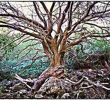 Magic Tree Harmony by dobresphoto