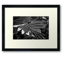 Leafy Textures Framed Print