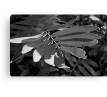 Leafy Textures Canvas Print