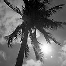 Palm Flare by AnalogSoulPhoto