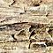 Macro Textures from Driftwood