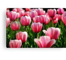 High Park Tulips Canvas Print
