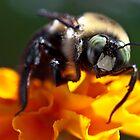 Bee by Dan Lauf