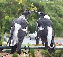 Juvenile Magpies by shortshooter-Al