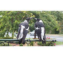 Juvenile Magpies Photographic Print