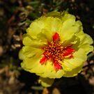 Succulent Flower by Geoffrey Higges