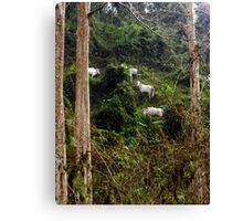 Jungle Cows Canvas Print