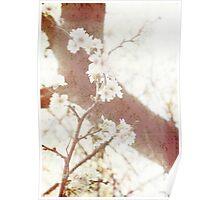 Spring in Tokyo Poster