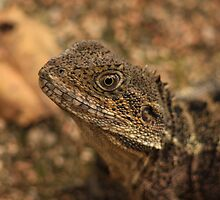 Water Dragon by paulmarkey