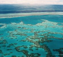 Great Barrier Reef © Vicki Ferrari by Vicki Ferrari
