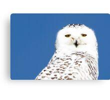 Snowy Owl stare Canvas Print