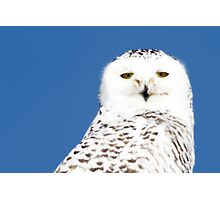 Snowy Owl stare Photographic Print