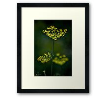 Flower pods Framed Print